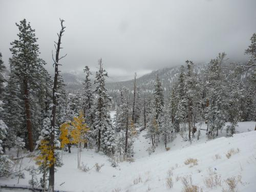7 Inches Of Snow On Mt Charleston