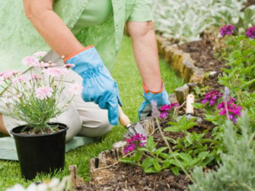 Top Plant Nurseries In Las Vegas To Start Your Spring Garden